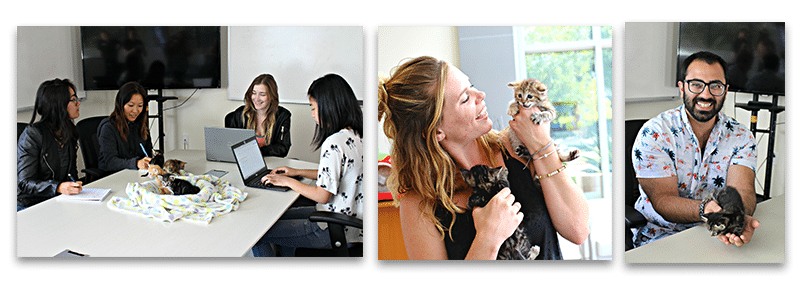 kittens in workplace