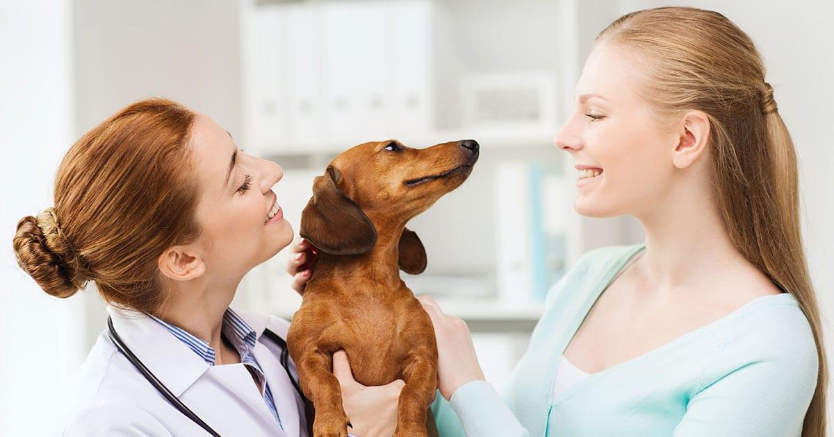 veterinary newsletter