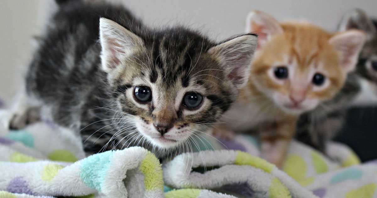 Kittens in the Workplace
