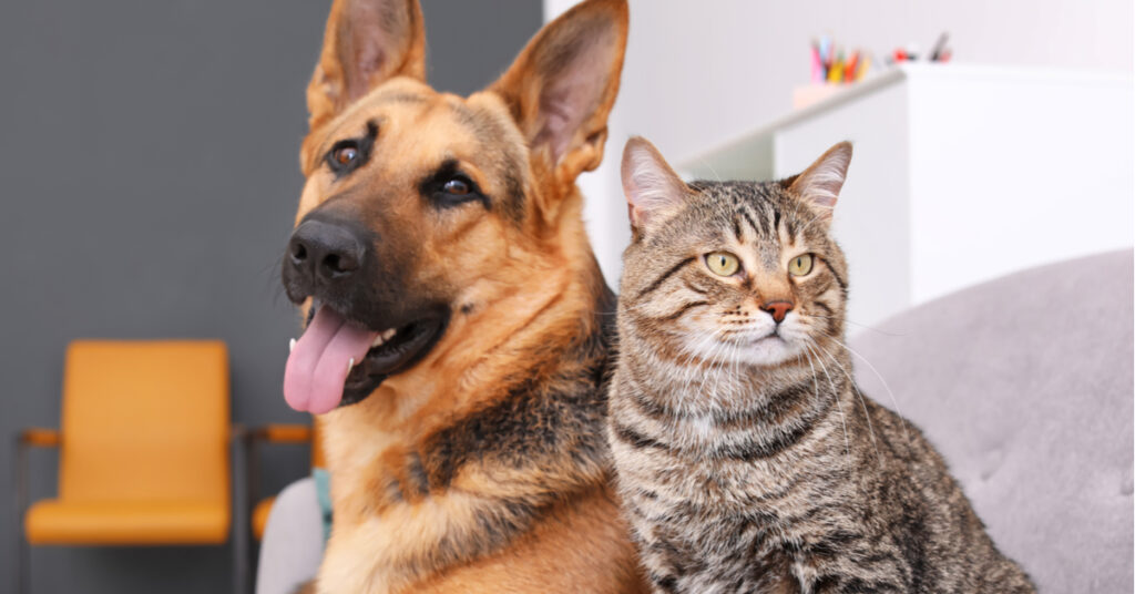 Photo of cat and dog.