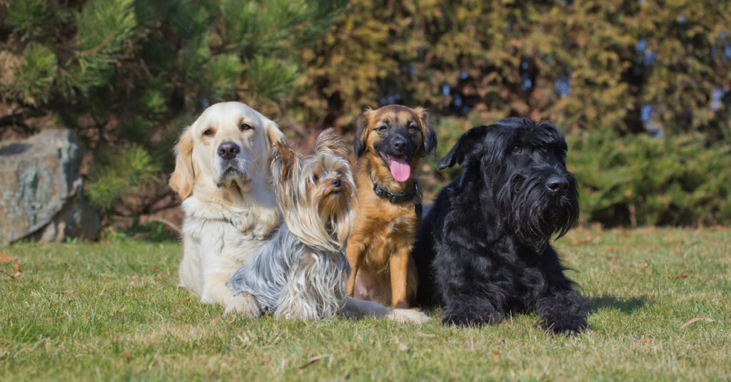 Dog breeds of different sizes and shapes.