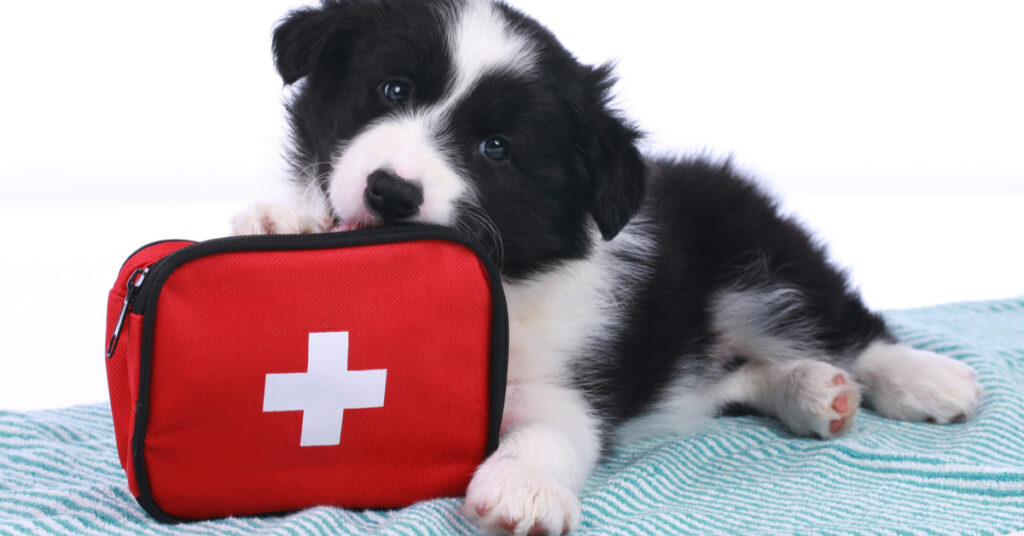 Puppy with a first aid kit.