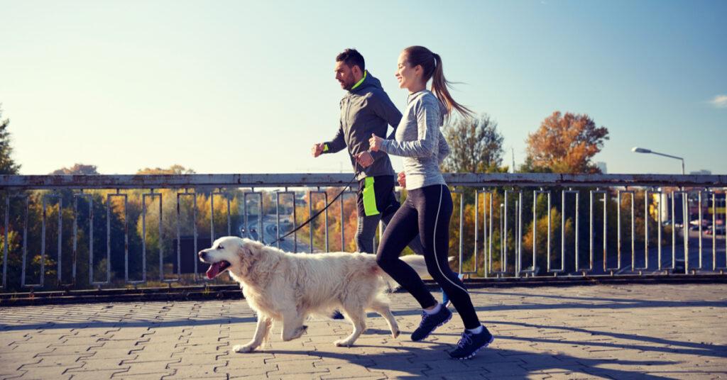 Couple running alongside Golden Retriever.